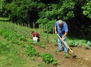 GA Garden help 1